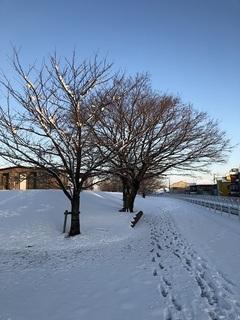 180124_雪景色.JPG