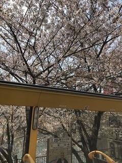 180404_市ヶ谷エリアの桜.jpg