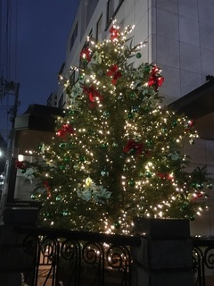 161201_南青山のクリスマスツリー